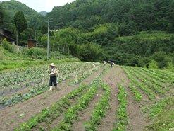 信州伝統野菜 鈴ヶ沢なす