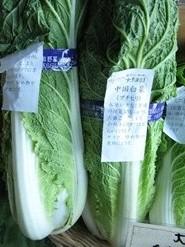 ミニ白菜-タケノコ白菜(プチヒリ)