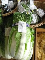 ミニ白菜-お黄にいり
